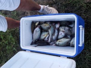 Caught a cooler of fish