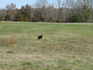 Dog Trials and Hunt Test held at Oak Grove