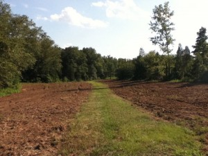 Plowed for Wildlife Planting