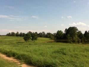 Pond & Field